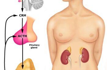 Fadiga adrenal e menopausa